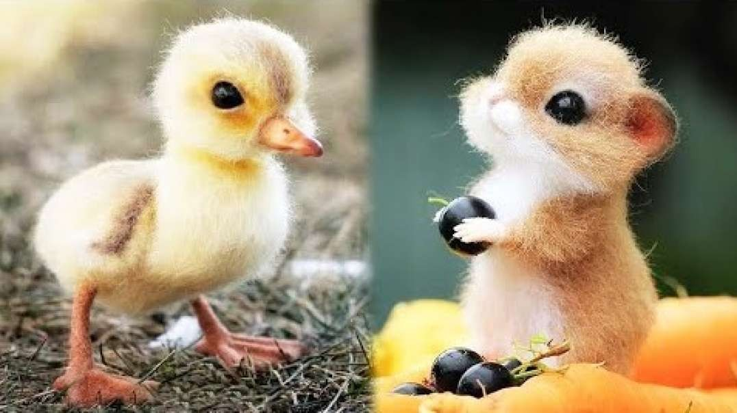 Animals SOO Cute! Cute baby animals Videos Compilation cutest moment of the animals